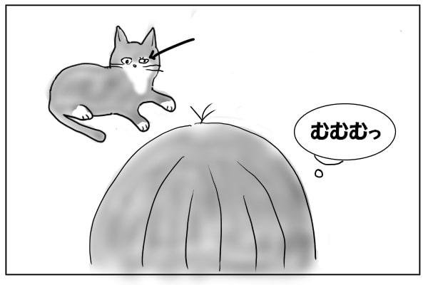 ヘルペスの猫