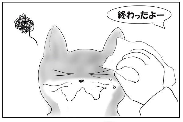 目薬がきらいな猫