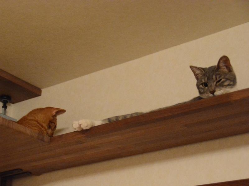 ボードの上の猫