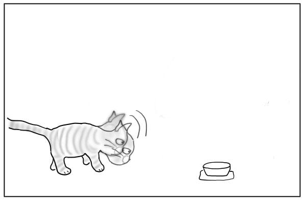 頭を上下する猫