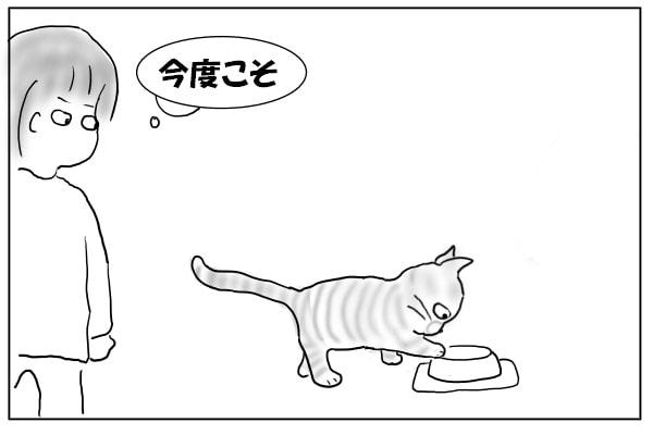 挑戦する猫