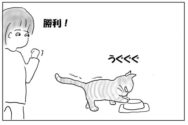 手こずる猫