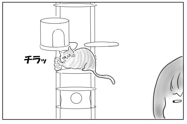 飼い主を見る猫