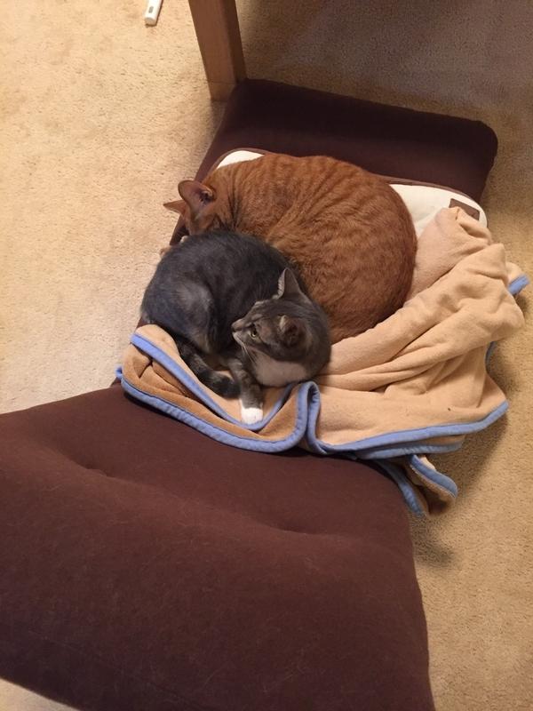 座椅子の上の猫