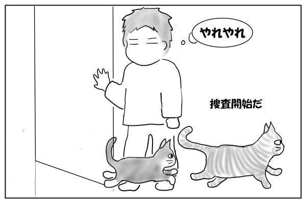 押し入る猫