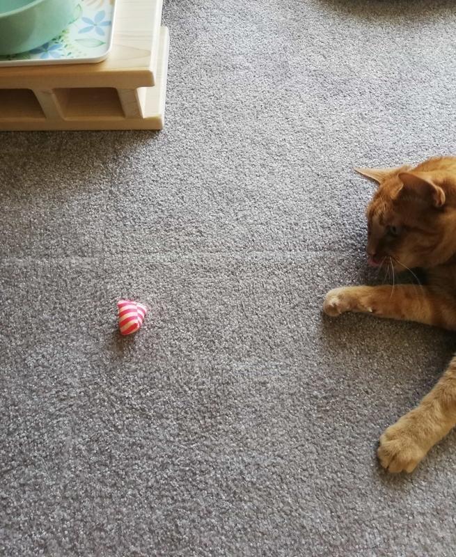 マキビシを見てる猫