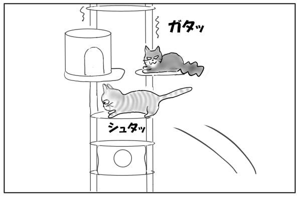 飛び乗る猫