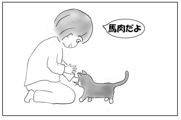 猫におやつをあげる