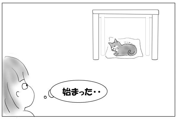 猫を見る人