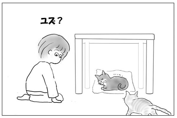 様子を見にきた猫