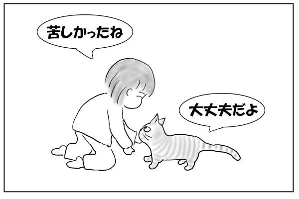 ケロっとしている猫