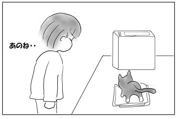書類に乗る猫