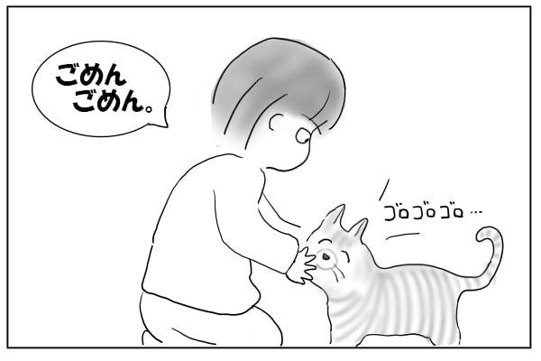 根に持たない猫