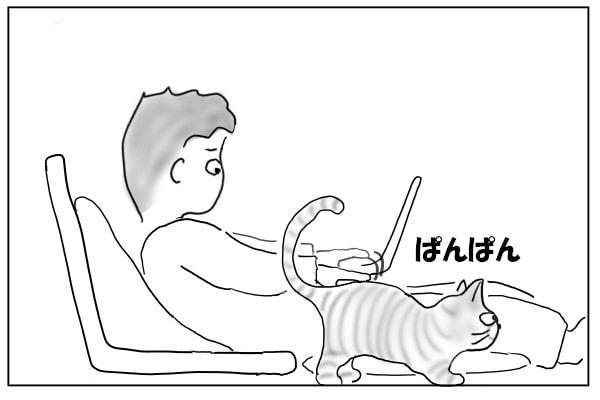 腰パンしてもらう猫