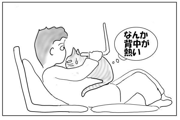 暑くなってきた猫