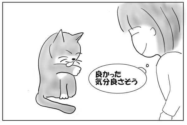 前足をなめる猫
