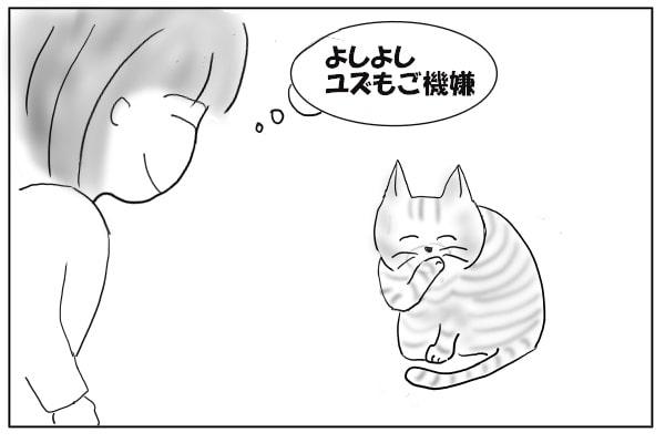 満足気な猫