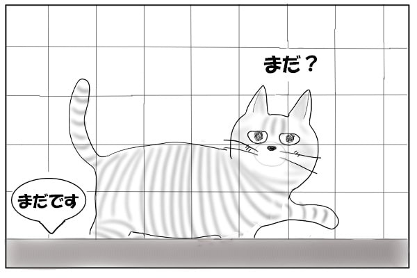 キッチンをのぞく猫