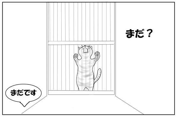 ガリガリする猫