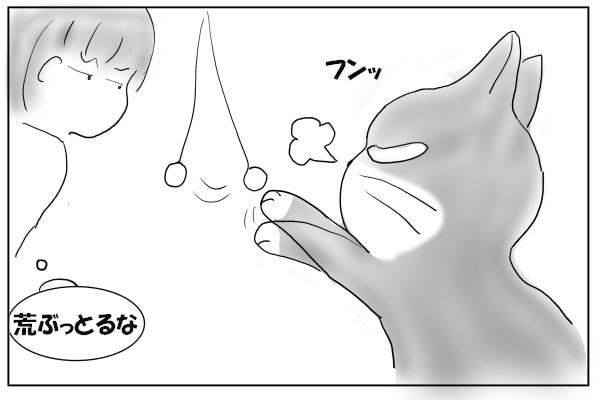 鼻息荒い猫