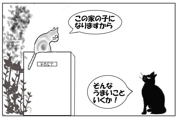 ノラ猫2匹
