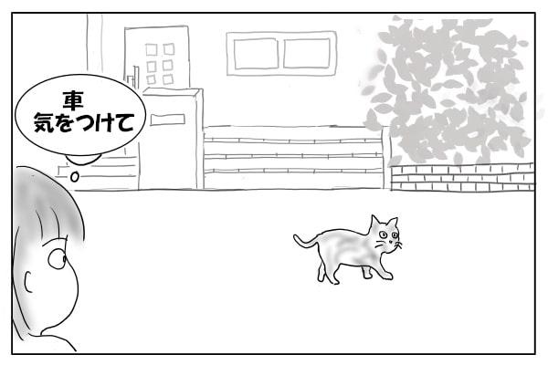 道を歩くサビ猫