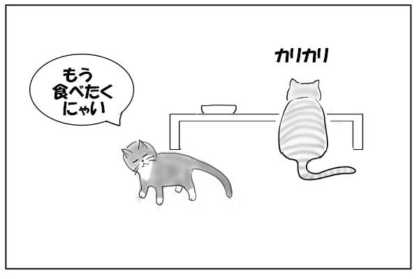 途中で食べるのをやめた猫