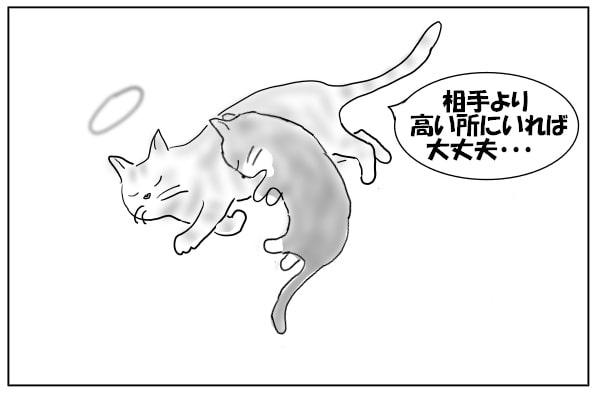 猫のアドバイス