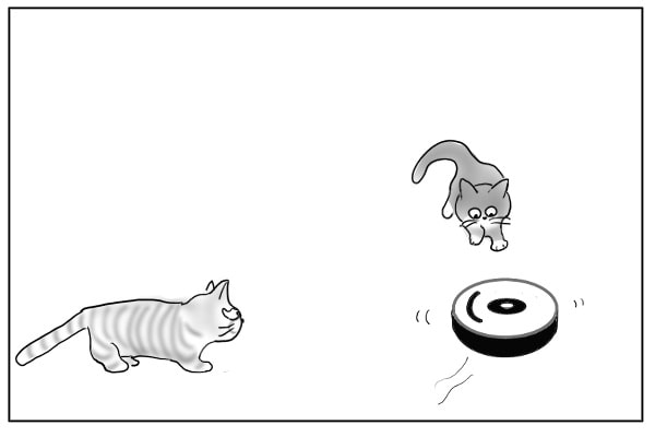 集まってくる猫