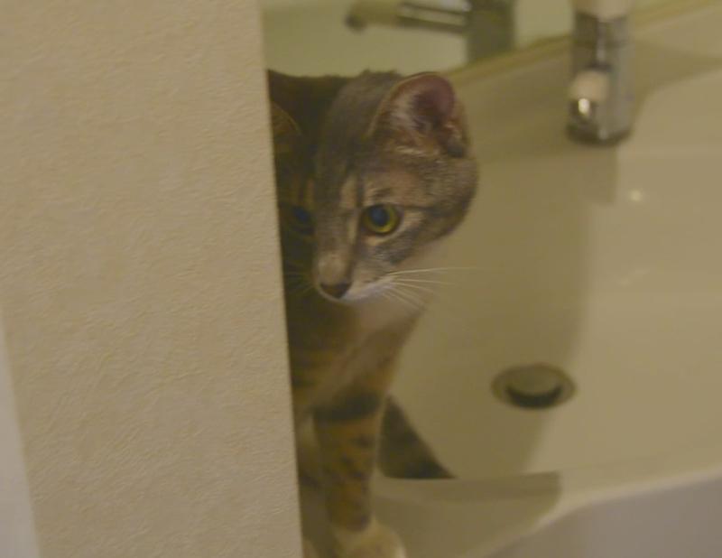 心配そうな猫