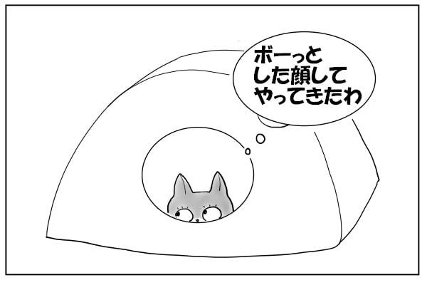 狙い定める猫