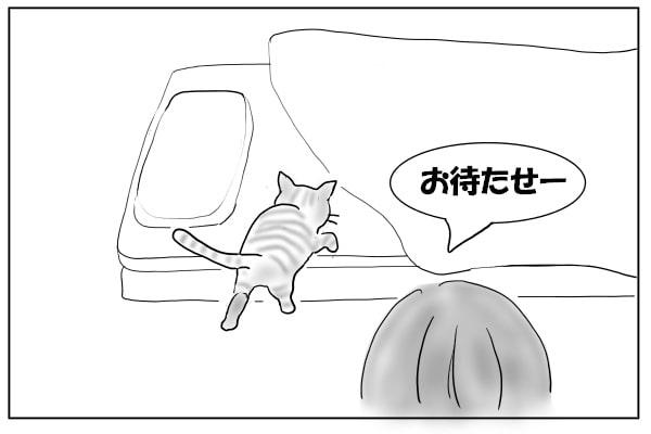 ふとんにのぼる猫