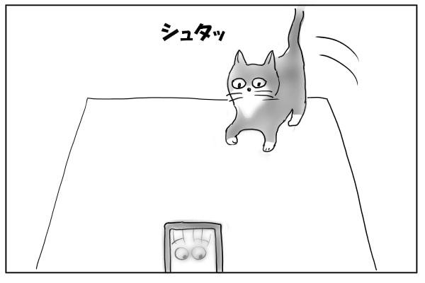 テーブルにのる猫