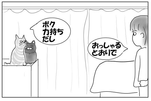 心配してほしい猫