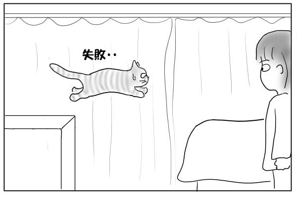失敗した猫