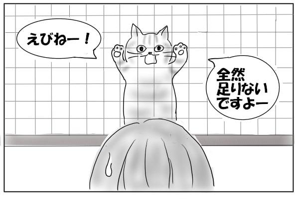 鳴き続ける猫