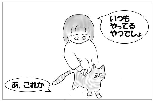 猫をブラッシング
