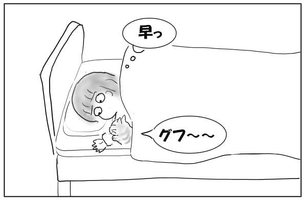 あっという間に寝た猫