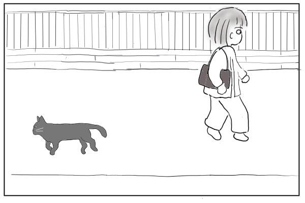 ノラ猫とすれ違う