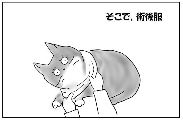 猫に服を着せる