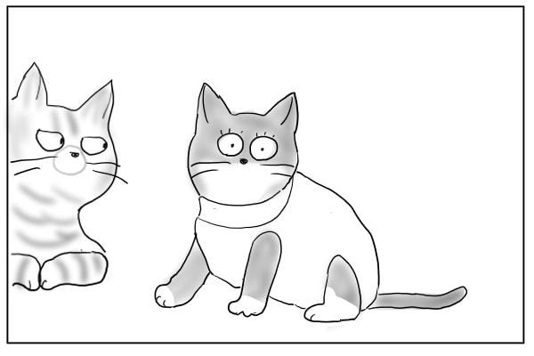 目が点の猫