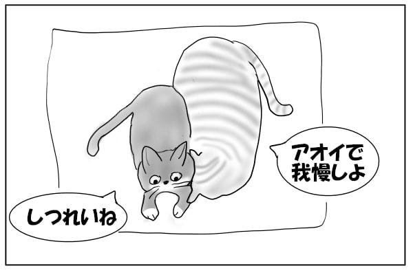 ごめん寝してる猫