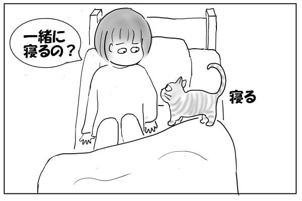 一緒に寝たい猫