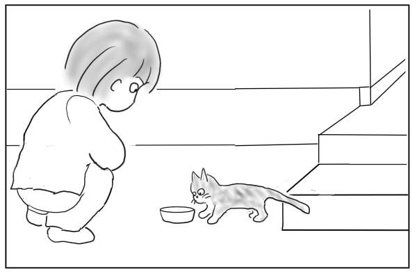 エサを食べるノラ猫