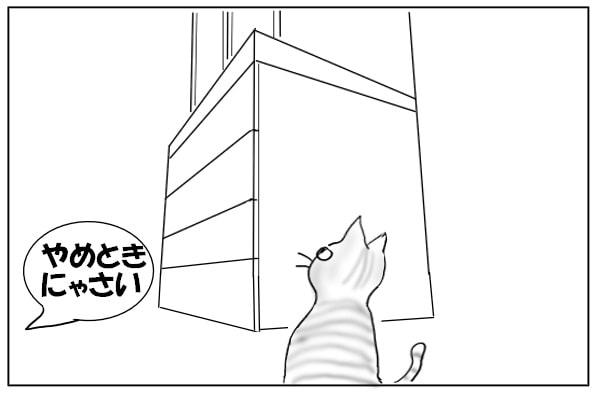 仲間の猫からの忠告