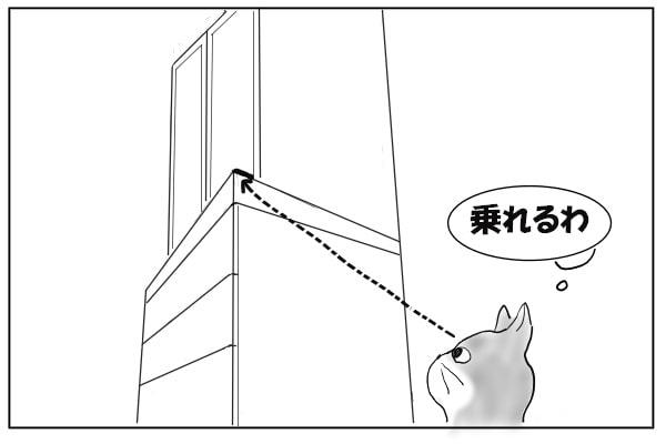 いけると踏んだ猫