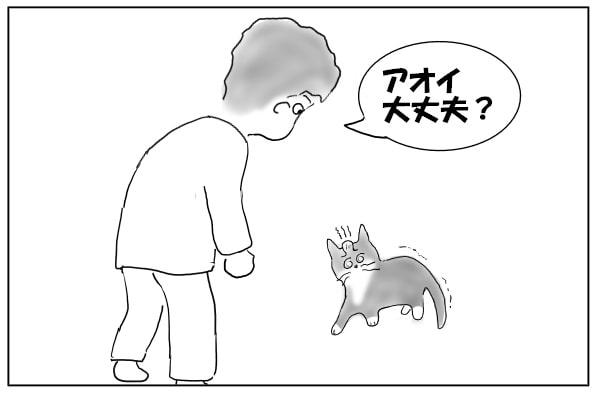 ふらつく猫