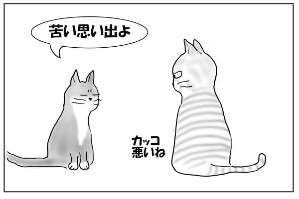 同居猫への忠告