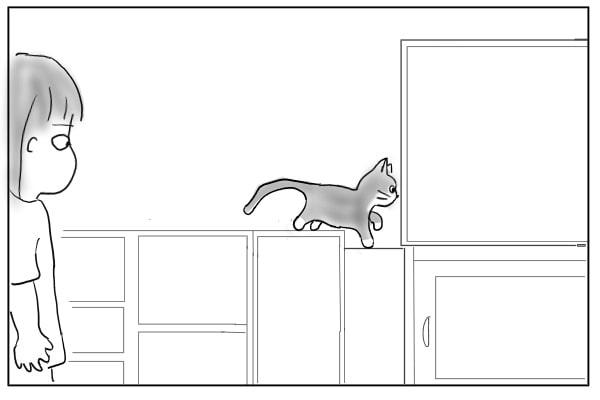 テレビの裏に入る猫