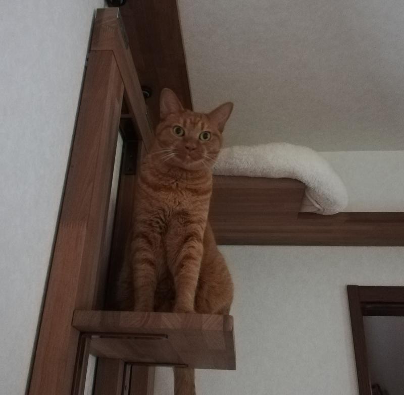 階段をのぼった猫